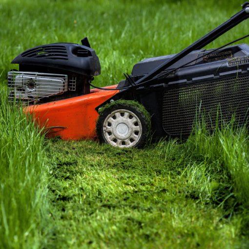 Best Mulch Lawn Mowers