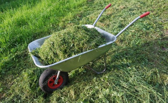 How To Compost Grass Clippings