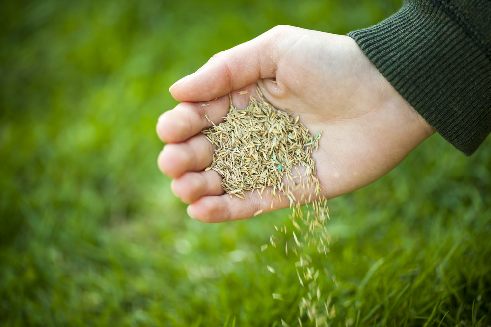timing for grass seeds