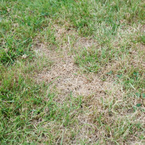 what to do with brown grass