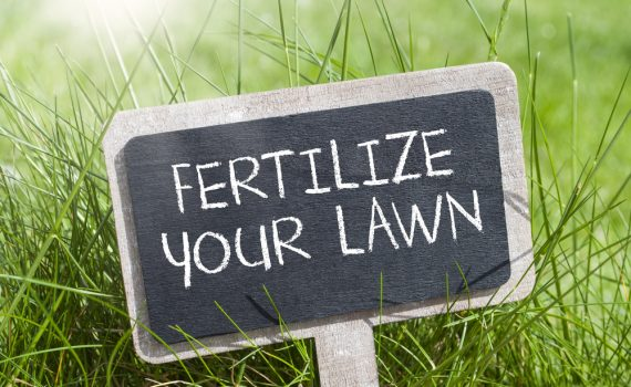 fertilize lawn